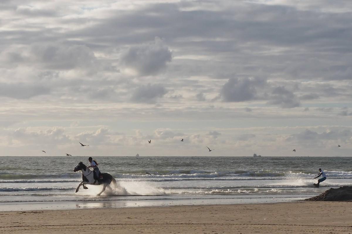 Wakeboarden Met Paarden In IJmuiden